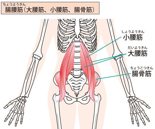 湾曲 症 脊柱